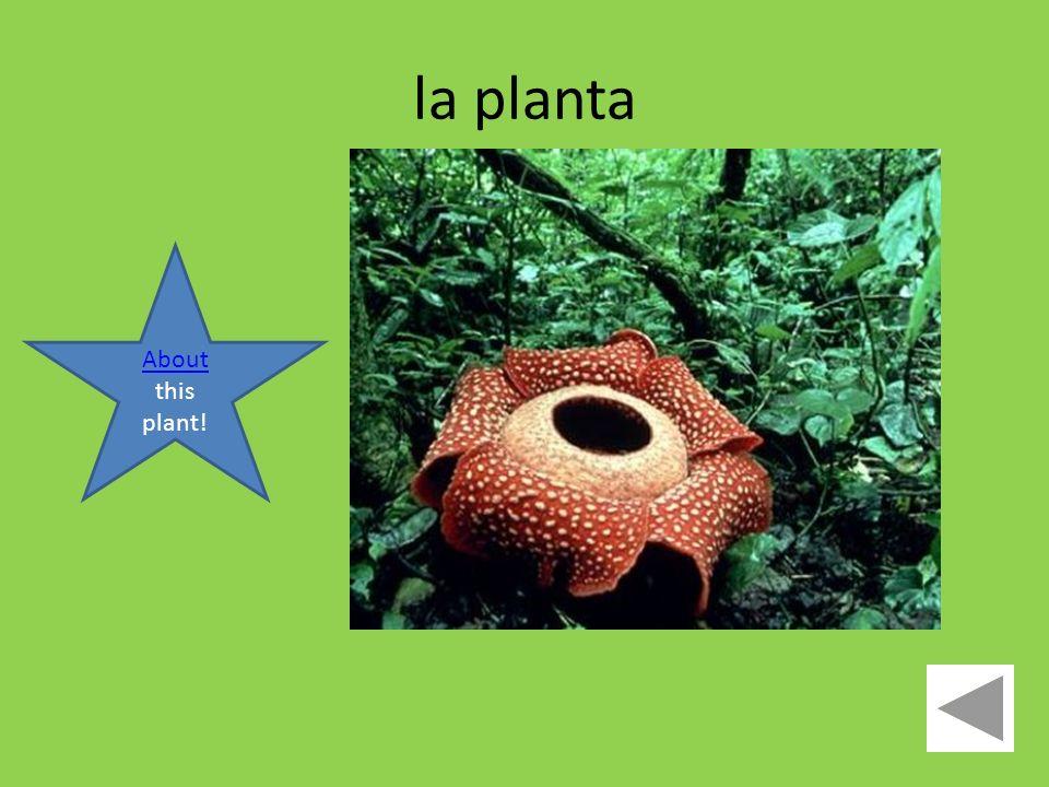 la planta About About this plant!