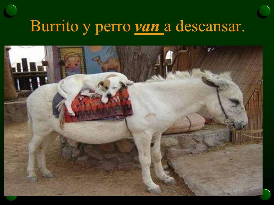 Burrito y perro van a descansar.