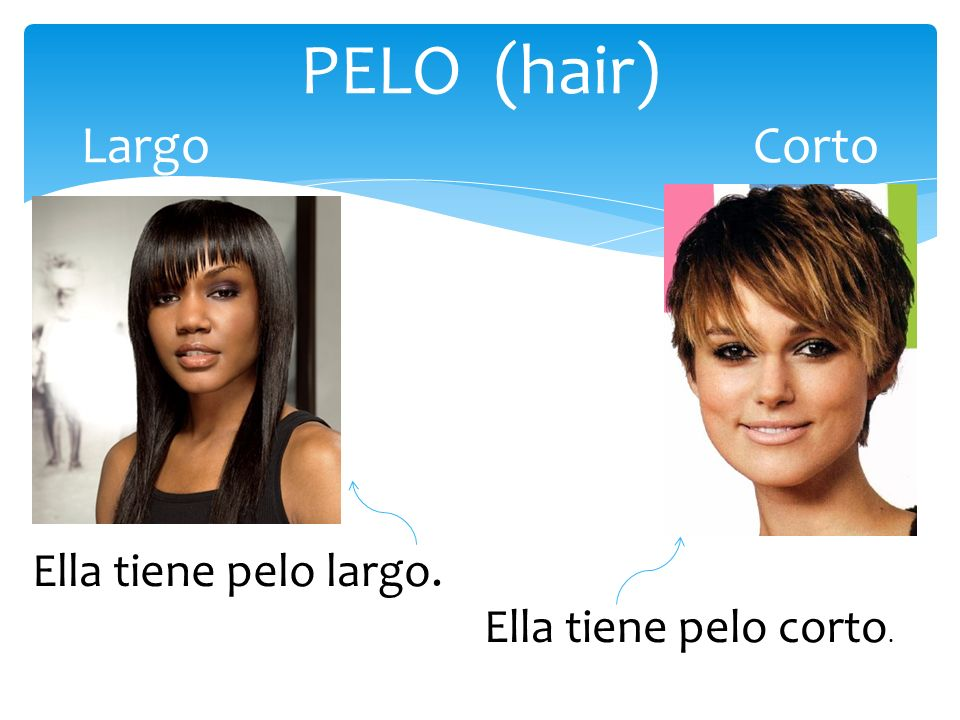 PELO (hair) LargoCorto Ella tiene pelo largo. Ella tiene pelo corto.