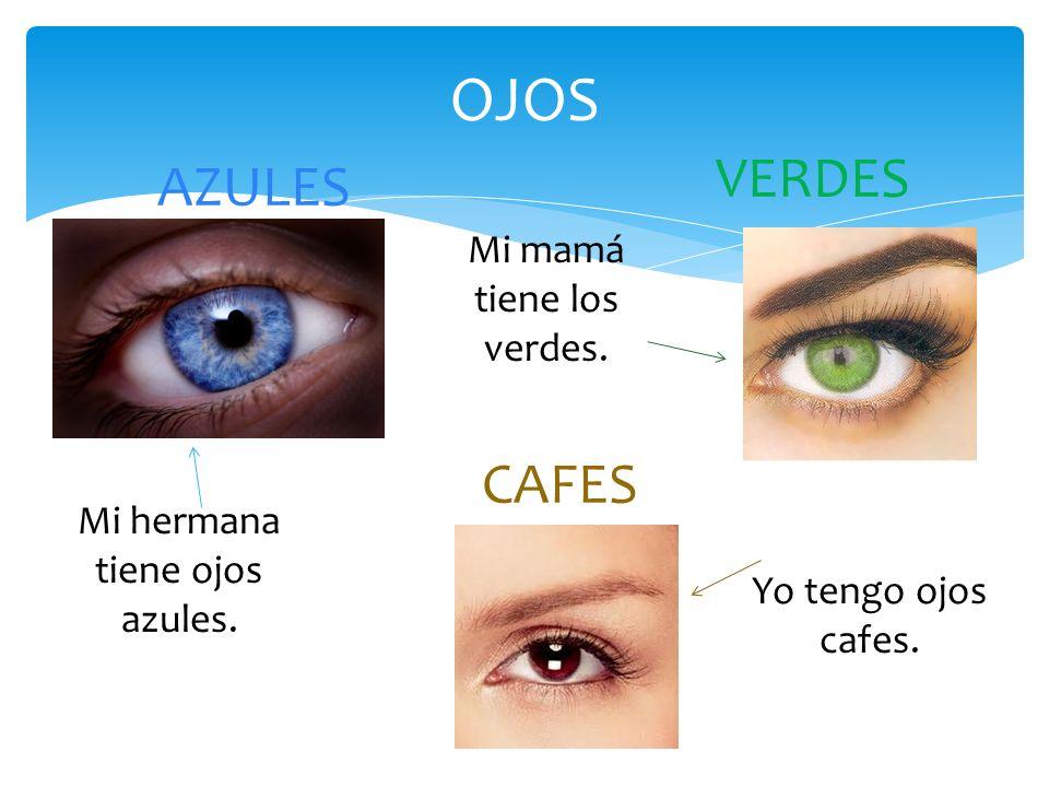 OJOS AZULES VERDES CAFES Mi hermana tiene ojos azules. Yo tengo ojos cafes. Mi mamá tiene los verdes.
