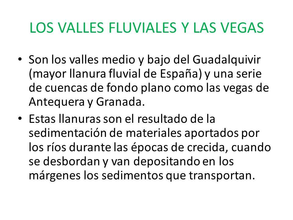 LOS VALLES FLUVIALES Y LAS VEGAS Son los valles medio y bajo del Guadalquivir (mayor llanura fluvial de España) y una serie de cuencas de fondo plano