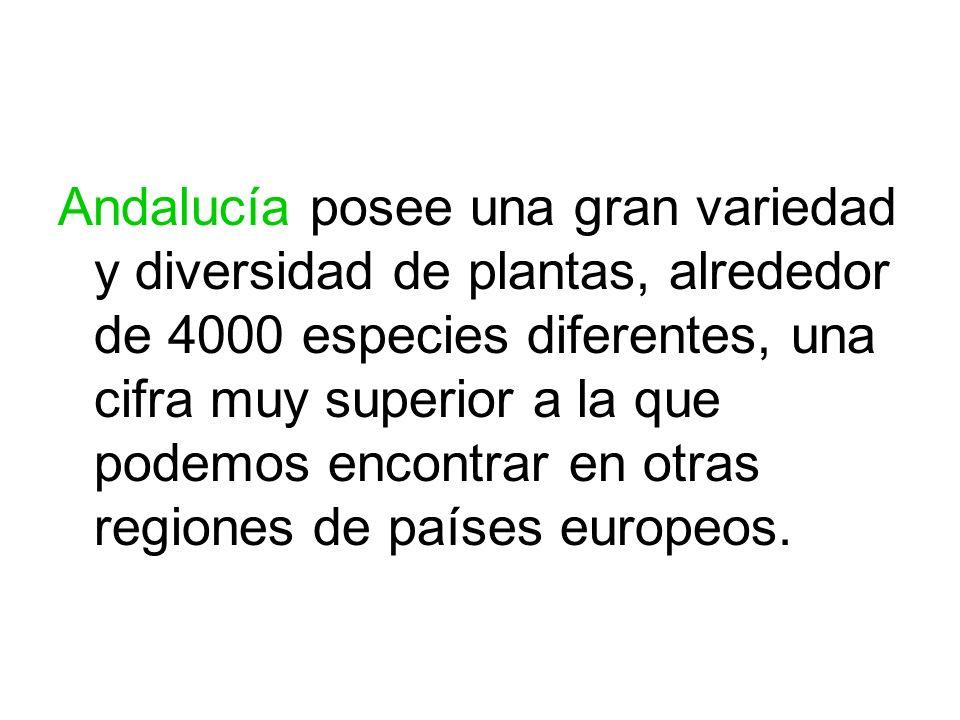 Andalucía posee una gran variedad y diversidad de plantas, alrededor de 4000 especies diferentes, una cifra muy superior a la que podemos encontrar en