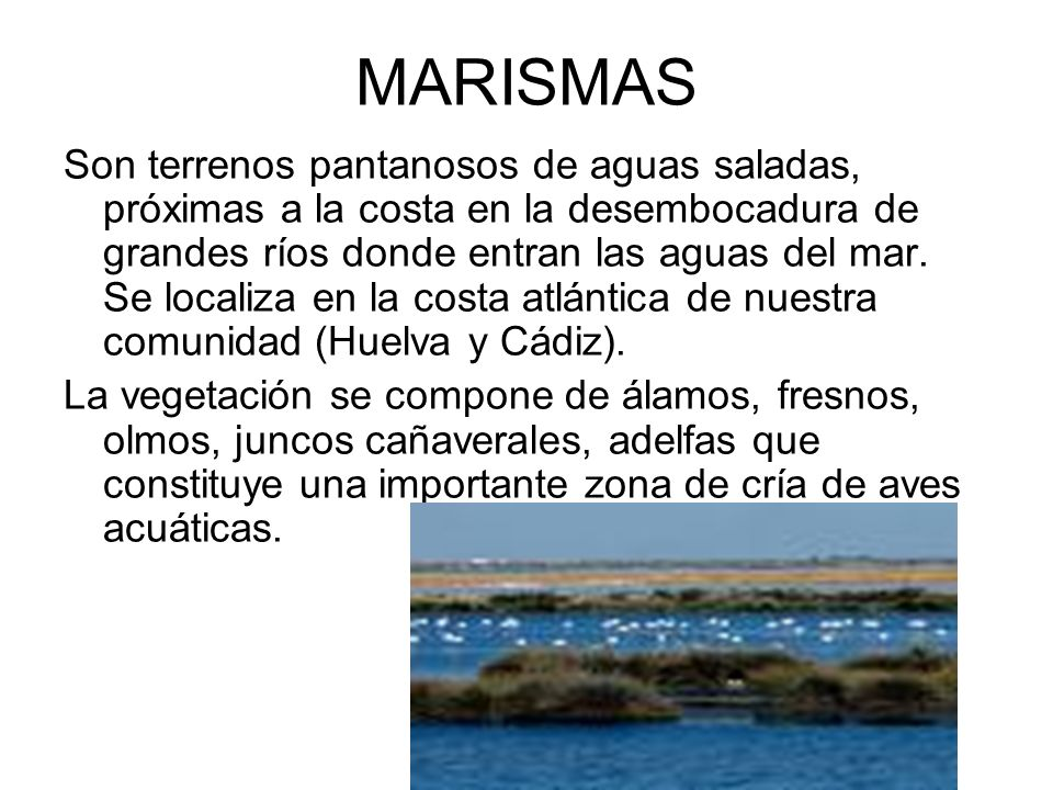 MARISMAS Son terrenos pantanosos de aguas saladas, próximas a la costa en la desembocadura de grandes ríos donde entran las aguas del mar. Se localiza