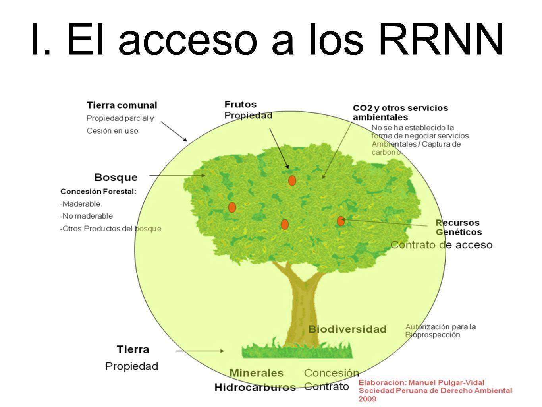 I. El acceso a los RRNN