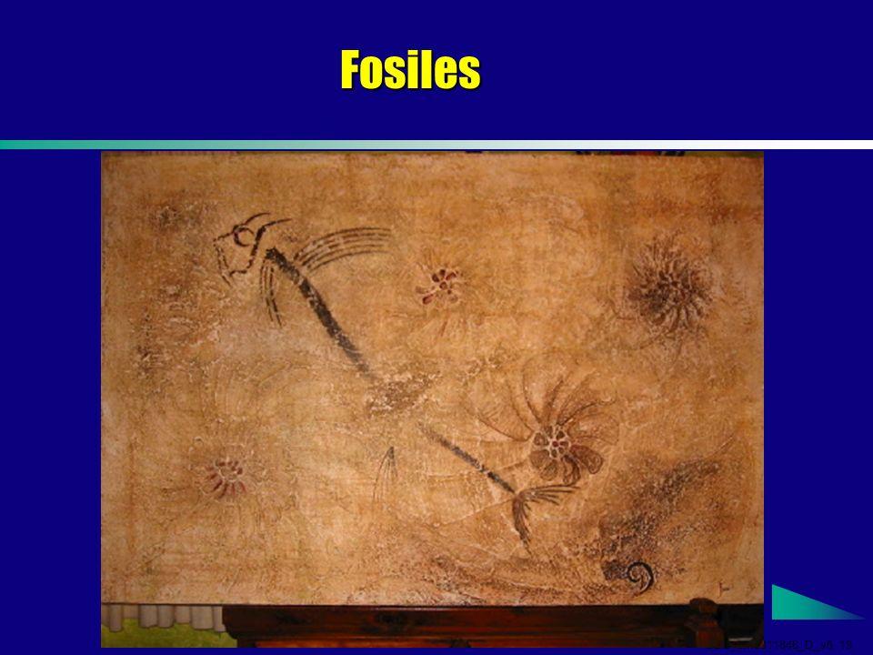 GDS_em0311846_D_v5 13 Fosiles