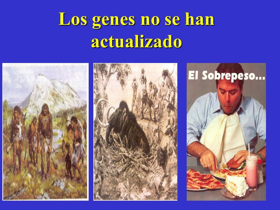 Los genes no se han actualizado. J.of Obesity 16 (4) 529-533