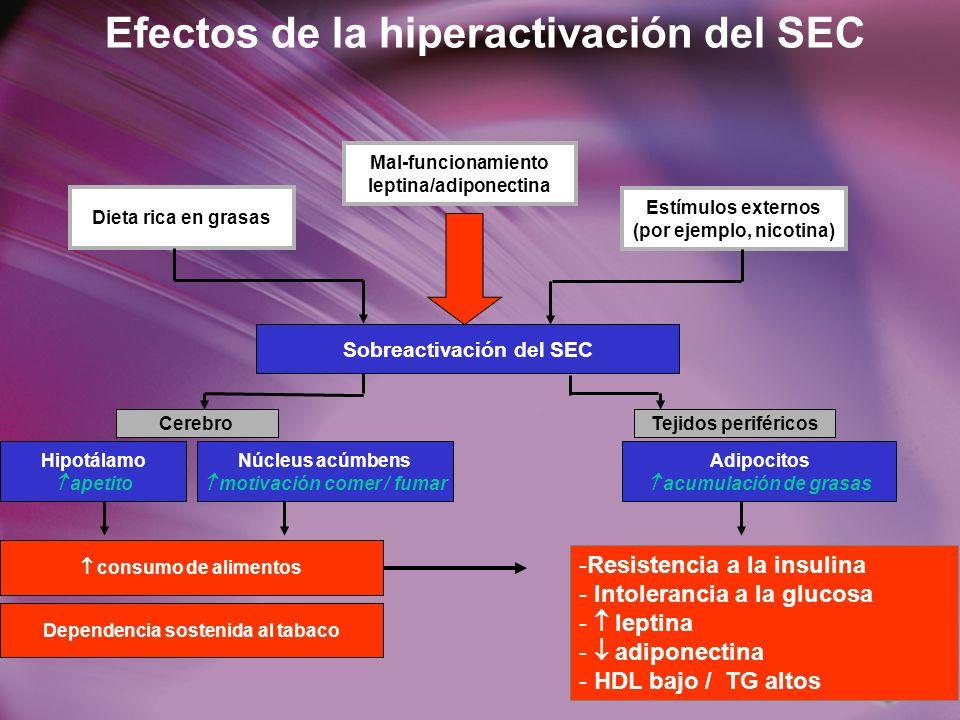 Efectos de la hiperactivación del SEC Dieta rica en grasas Estímulos externos (por ejemplo, nicotina) Sobreactivación del SEC CerebroTejidos periféricos Hipotálamo apetito Núcleus acúmbens motivación comer / fumar Adipocitos acumulación de grasas consumo de alimentos Dependencia sostenida al tabaco -Resistencia a la insulina - Intolerancia a la glucosa - leptina - adiponectina - HDL bajo / TG altos Mal-funcionamiento leptina/adiponectina