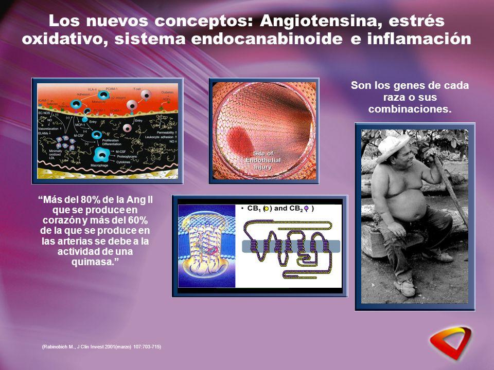 Los nuevos conceptos: Angiotensina, estrés oxidativo, sistema endocanabinoide e inflamación Son los genes de cada raza o sus combinaciones.
