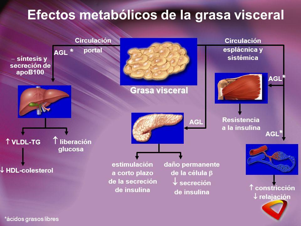 Efectos metabólicos de la grasa visceral * AGL * Grasa visceral VLDL-TG síntesis y secreción de apoB100 HDL-colesterol *ácidos grasos libres Circulación portal liberación glucosa * AGL * Circulación esplácnica y sistémica daño permanente de la célula secreción de insulina estimulación a corto plazo de la secreción de insulina AGL Resistencia a la insulina constricción relajación * AGL *