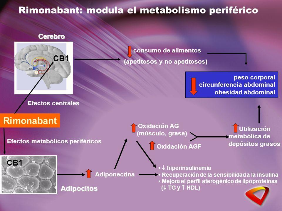 Rimonabant: modula el metabolismo periféricoCerebro CB1 CB1 Adipocitos Rimonabant Efectos centrales Efectos metabólicos periféricos consumo de aliment
