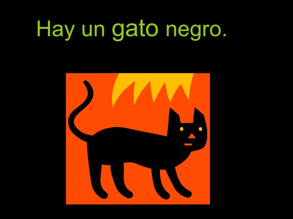 Hay un gato negro.