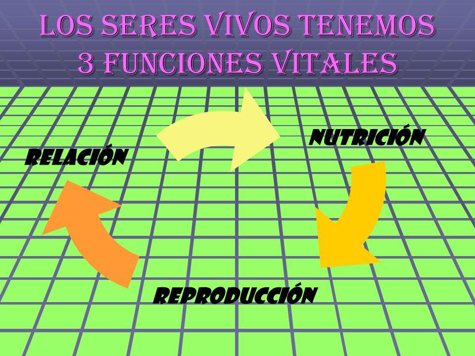 Los seres vivos tenemos 3 funciones vitales reproducción nutrición Relación