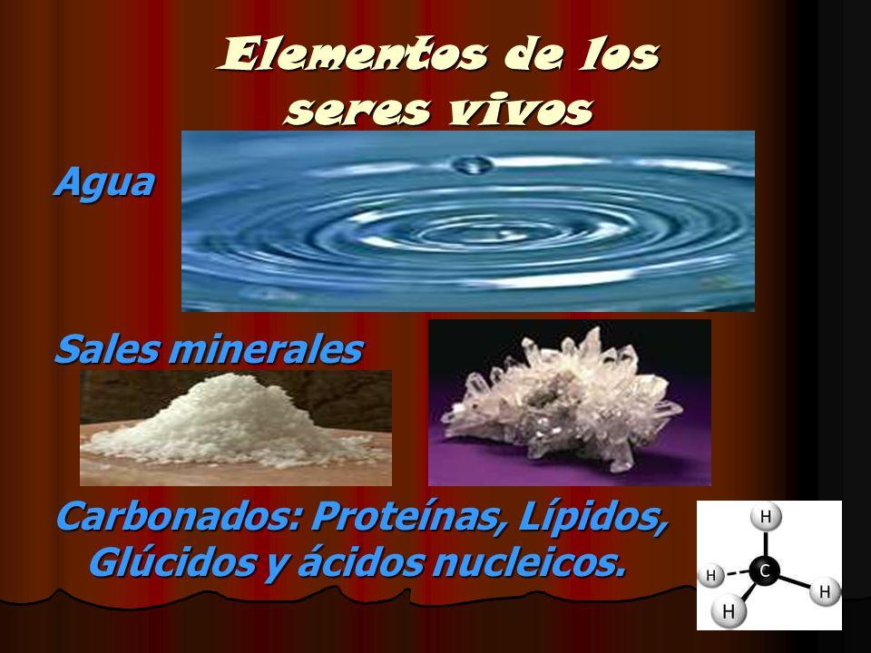 Elementos de los seres vivos Agua Sales minerales Carbonados: Proteínas, Lípidos, Glúcidos y ácidos nucleicos.