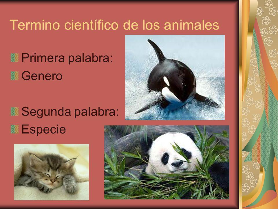 Termino científico de los animales Primera palabra: Genero Segunda palabra: Especie