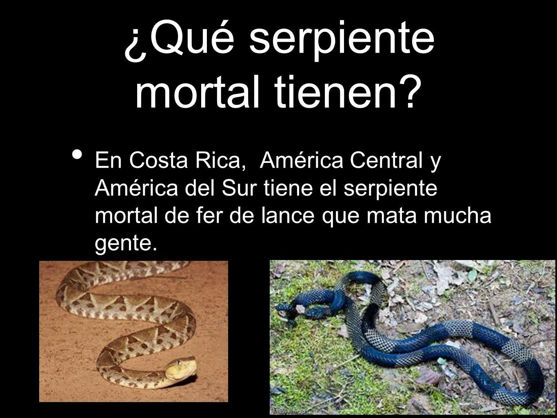 ¿Qué serpiente mortal tienen? En Costa Rica, América Central y América del Sur tiene el serpiente mortal de fer de lance que mata mucha gente.