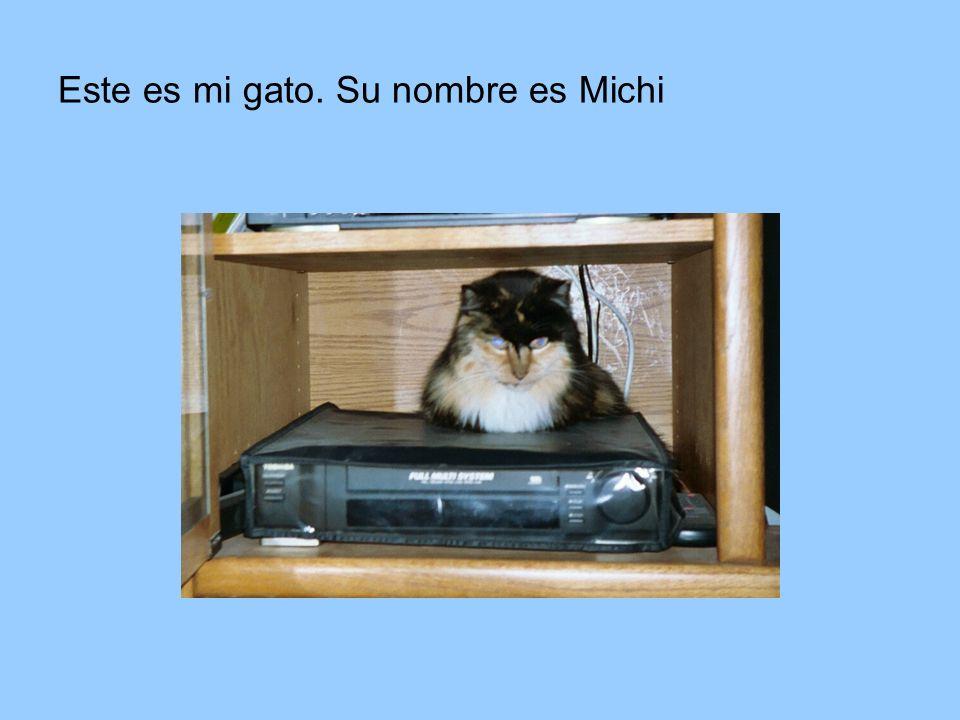 Este es mi gato. Su nombre es Michi