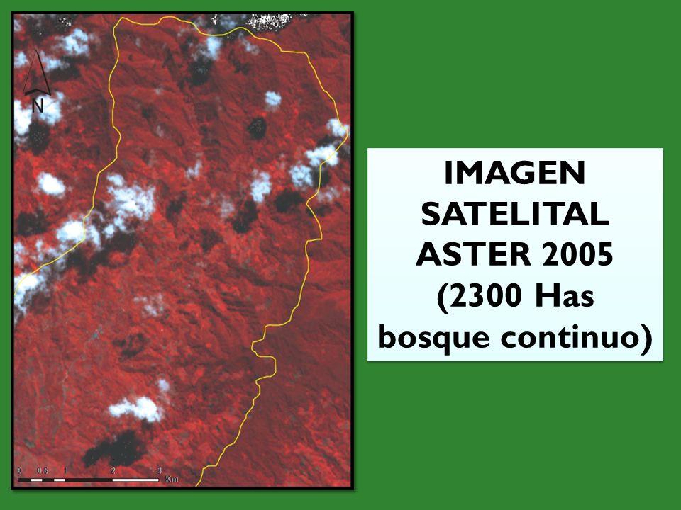 IMAGEN SATELITAL ASTER 2005 (2300 Has bosque continuo) IMAGEN SATELITAL ASTER 2005 (2300 Has bosque continuo)