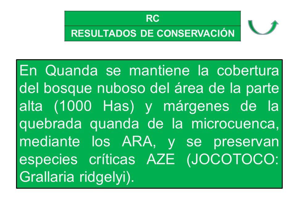 RC RESULTADOS DE CONSERVACIÓN En Quanda se mantiene la cobertura del bosque nuboso del área de la parte alta (1000 Has) y márgenes de la quebrada quanda de la microcuenca, mediante los ARA, y se preservan especies críticas AZE (JOCOTOCO: Grallaria ridgelyi).