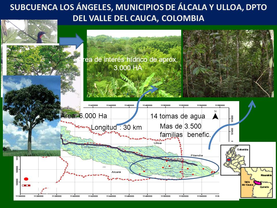 Bocatoma Límite municipal SUBCUENCA LOS ÁNGELES, MUNICIPIOS DE ÁLCALA Y ULLOA, DPTO DEL VALLE DEL CAUCA, COLOMBIA Longitud : 30 km Área: 6.000 Ha 14 tomas de agua Mas de 3.500 familias benefic.