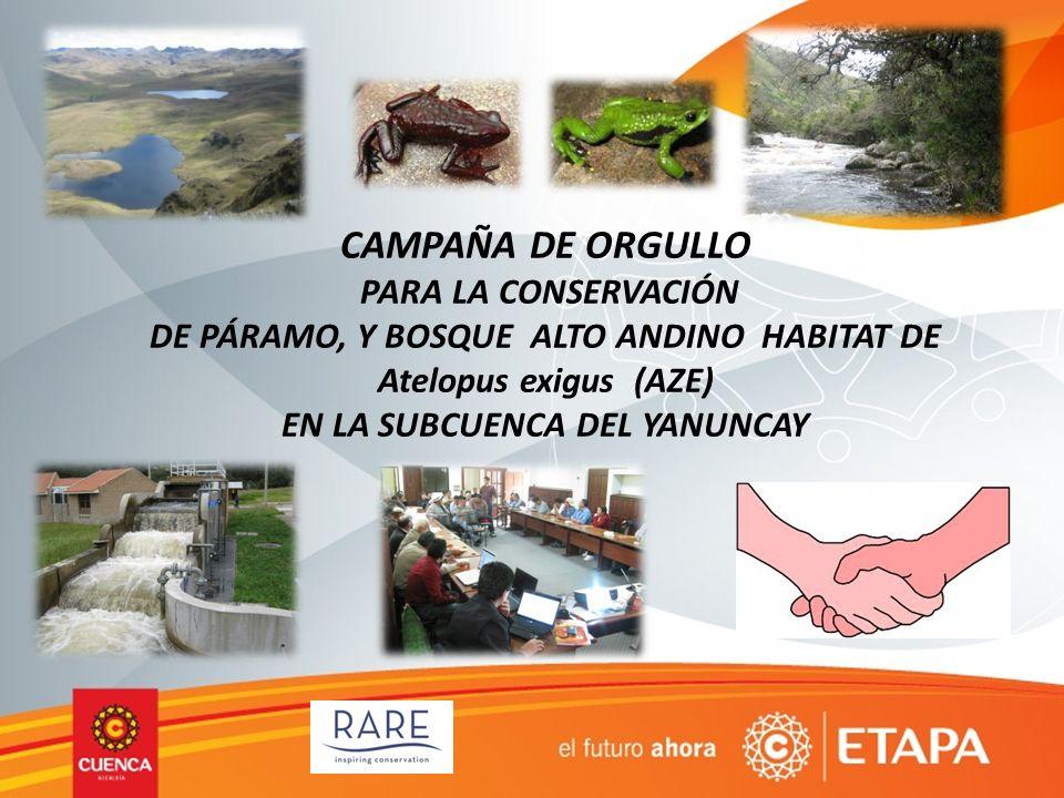 METAS Mitigación de amenazas 1.En el área priorizada (biocorredor del Yanuncay) se pretende reducir la ganadería extensiva en los páramos, esto principalmente en las propiedades que firman ARAs 2.Disminuir los agentes contaminantes que recibe el rio Yanuncay por la ganadería intensiva en las zonas de alta producción Resultados de conservación 1.Con los ARAs se logra la conservación de 2000 ha de páramo y bosque alto andino hábitat de especies AZE (Atelopus sp)