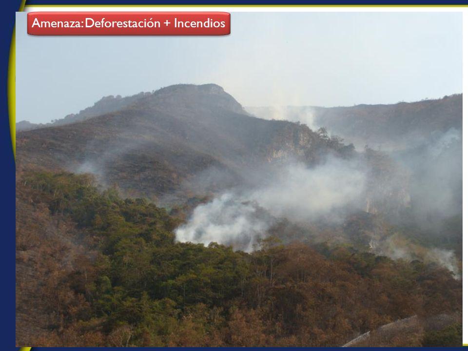 9 Amenaza: Deforestación + Incendios