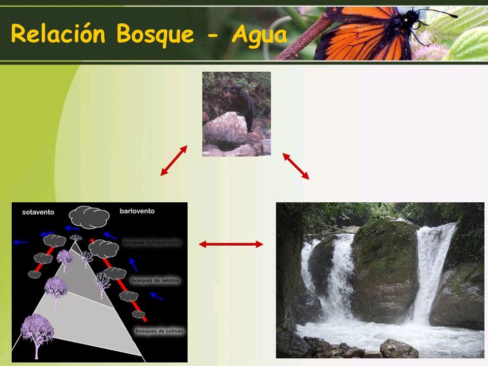 Extracción forestal selectiva (árboles y palmeras) Extracción forestal no selectiva por cajoneros Expansión de la frontera agropecuaria