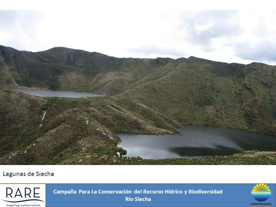 Campaña Para La Conservación del Recurso Hídrico y Biodiversidad Río Siecha Amenazas de origen Antrópico: Deforestación.