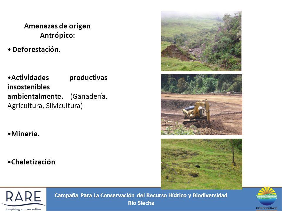 Campaña Para La Conservación del Recurso Hídrico y Biodiversidad Río Siecha Amenazas de origen Antrópico: Deforestación. Actividades productivas insos