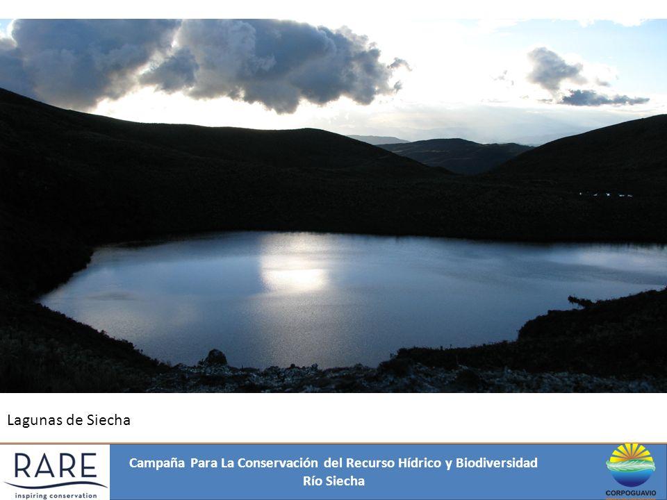 Campaña Para La Conservación del Recurso Hídrico y Biodiversidad Río Siecha ÁREA DE TRABAJO ÁREA: 145,19 km². Total predios: 3821 Predios cuenca alta: