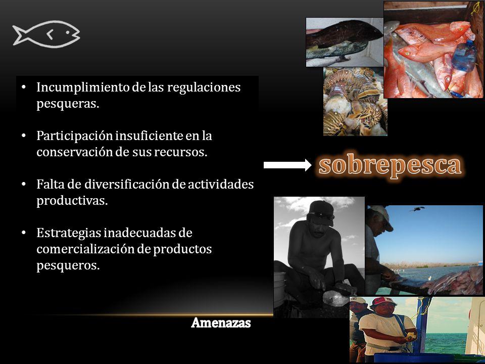 Incumplimiento de las regulaciones pesqueras.