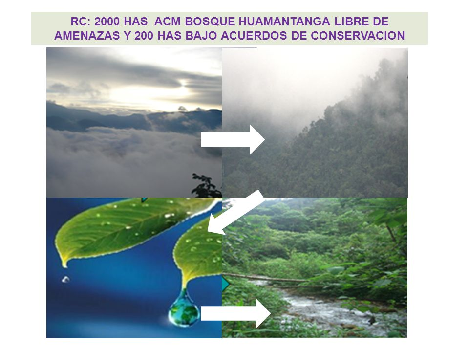 RC: 2000 HAS ACM BOSQUE HUAMANTANGA LIBRE DE AMENAZAS Y 200 HAS BAJO ACUERDOS DE CONSERVACION