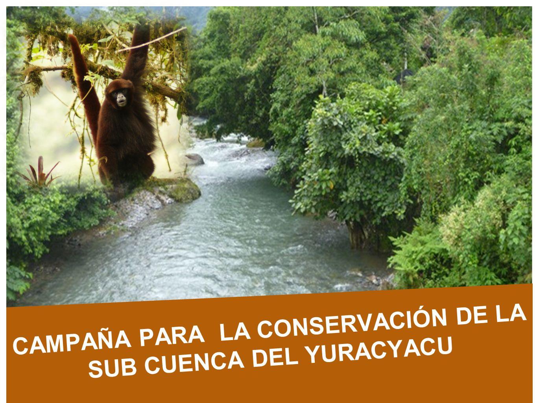 Amazonas Loreto San Martín Océano Pacífico PERÚ SUB CUENCA DE YURACYACU 25.234 has SUB CUENCA DE YURACYACU 25.234 has BOSQUE DE PROTECCIÓN ALTO MAYO 182 000 has BOSQUE DE PROTECCIÓN ALTO MAYO 182 000 has