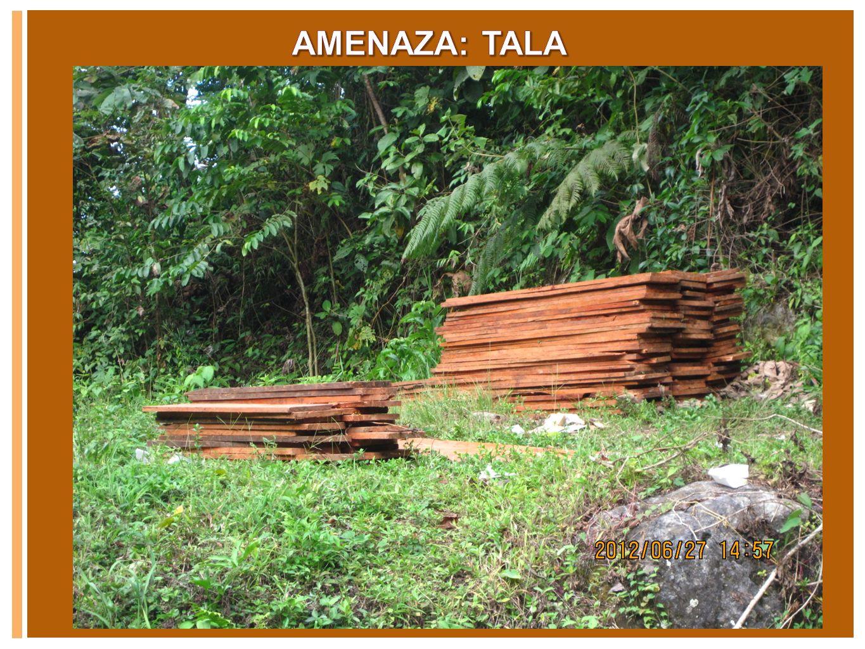 Las amas de casa están dispuestas a contribuir a conservar los bosques de la parte alta, siempre y cuando el agua que reciben este limpia.