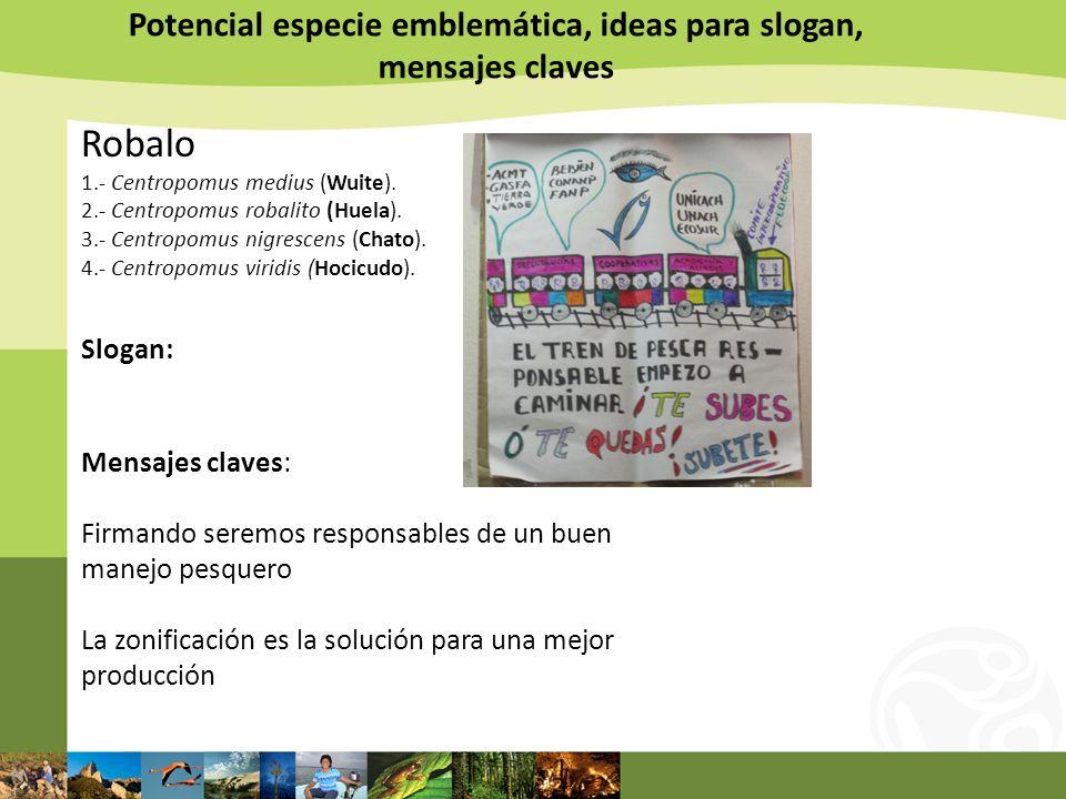 Potencial especie emblemática, ideas para slogan, mensajes claves Robalo 1.- Centropomus medius (Wuite). 2.- Centropomus robalito (Huela). 3.- Centrop