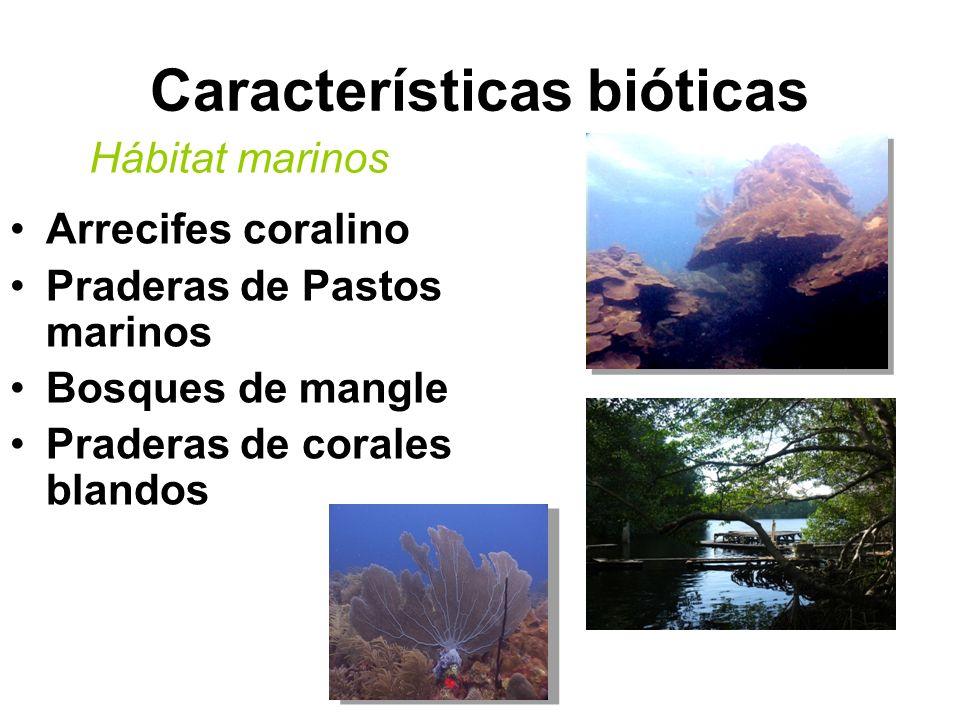 Características bióticas Arrecifes coralino Praderas de Pastos marinos Bosques de mangle Praderas de corales blandos Hábitat marinos