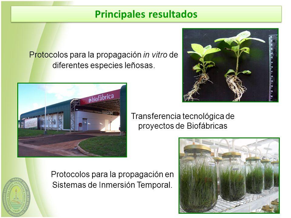 Principales resultados Protocolos para la propagación in vitro de diferentes especies leñosas. Transferencia tecnológica de proyectos de Biofábricas P