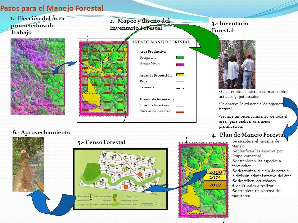 Pasos para el Manejo Forestal 1.- Elección del Área prometedora de Trabajo 2.- Mapeo y diseño del Inventario Forestal 3.- Inventario Forestal Se deter