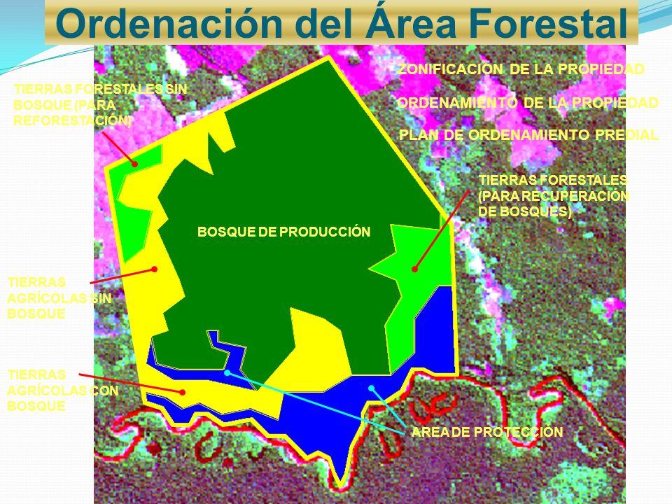 ZONIFICACION DE LA PROPIEDAD TIERRAS FORESTALES (PARA RECUPERACIÓN DE BOSQUES) ORDENAMIENTO DE LA PROPIEDAD BOSQUE DE PRODUCCIÓN PLAN DE ORDENAMIENTO