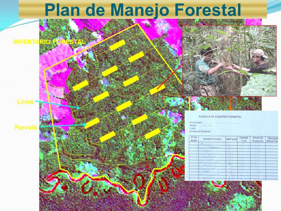 INVENTARIO FORESTAL Línea Parcela Plan de Manejo Forestal