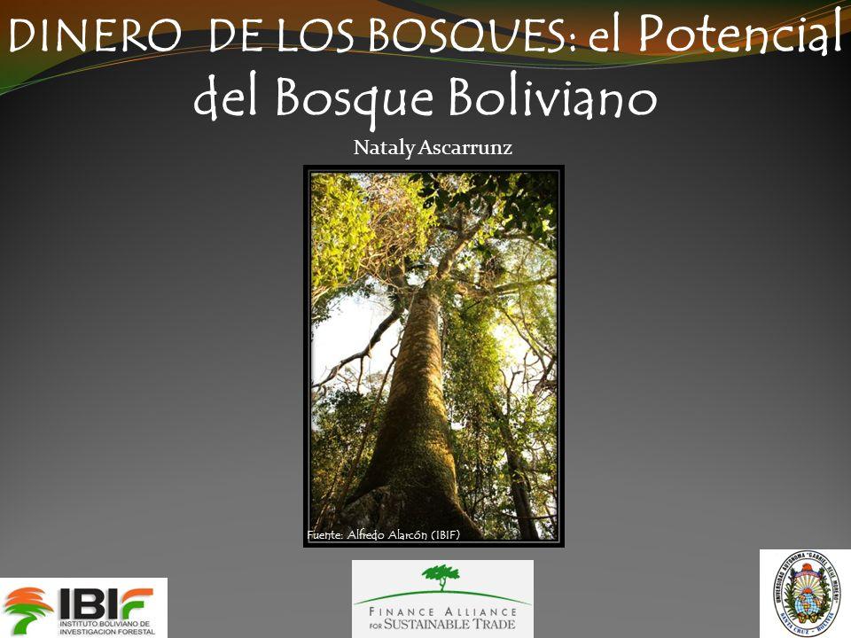 DINERO DE LOS BOSQUES: el Potencial del Bosque Boliviano Nataly Ascarrunz Fuente: Alfredo Alarcón (IBIF)