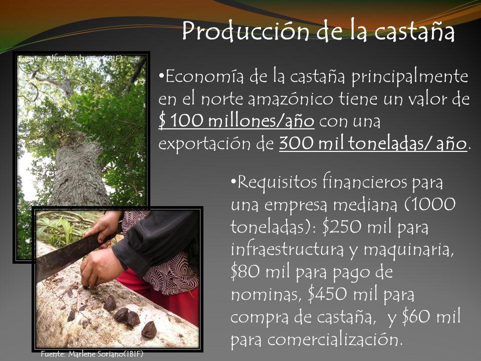 Producción de la castaña Economía de la castaña principalmente en el norte amazónico tiene un valor de $ 100 millones/año con una exportación de 300 m