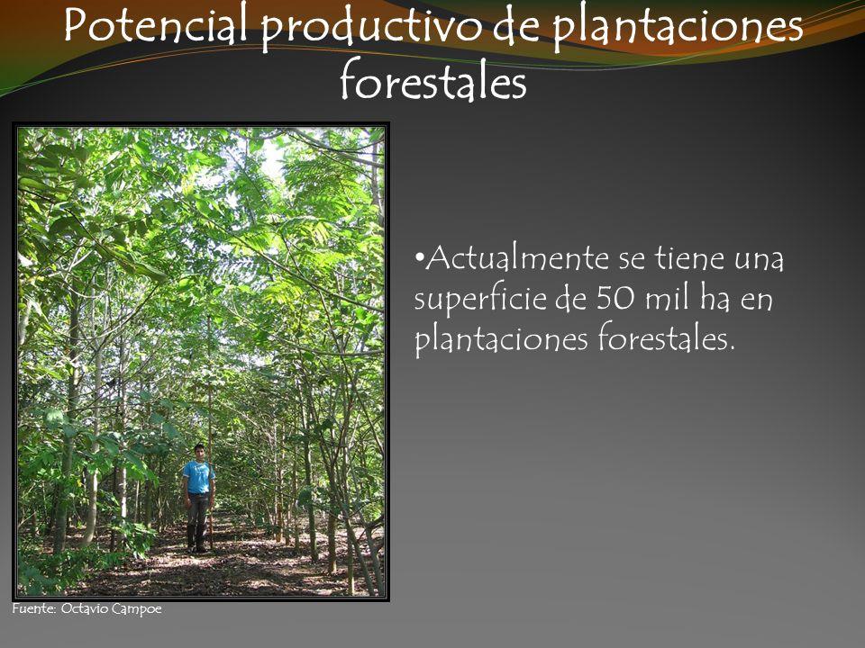 Potencial productivo de plantaciones forestales Actualmente se tiene una superficie de 50 mil ha en plantaciones forestales. Fuente: Octavio Campoe