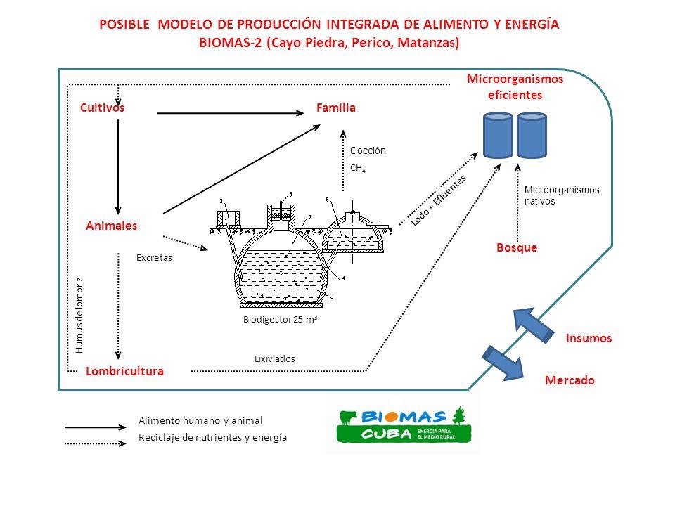 Gasificación de biomasa Generación de electricidad limpia y gas para motores Materias primas: residuos de aserríos y de podas de arbóreas, paja de arroz, marabú Una opción para electrificar comunidades y fincas agropecuarias no conectadas al SEN y para generar al SEN Ofertas de ANKUR: GAS-22 – 20 Kw, un generador de gas y un motor.