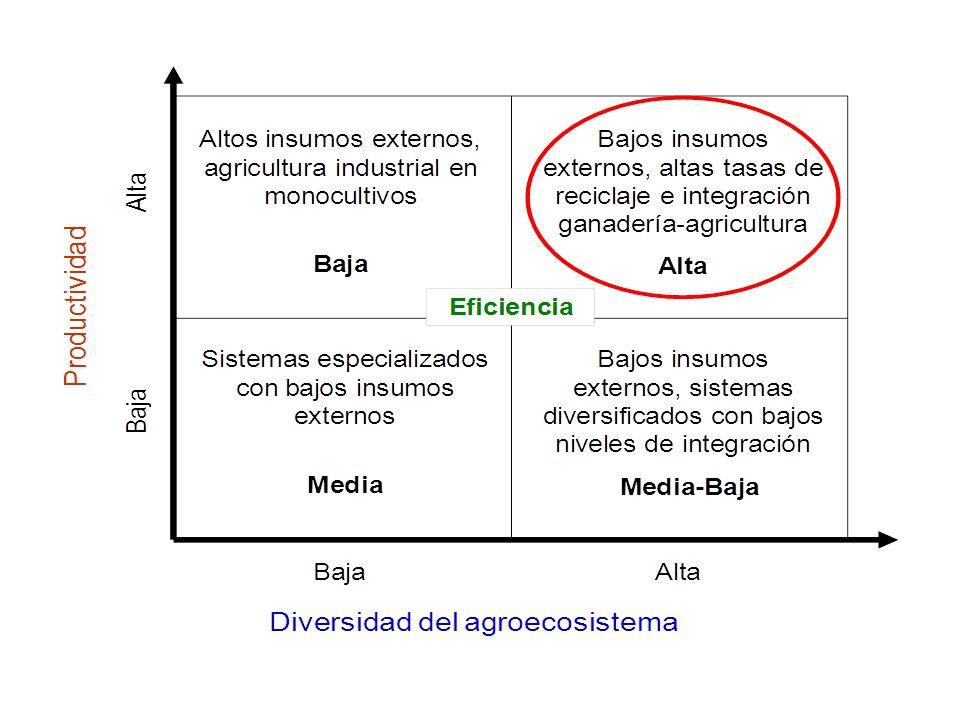 PRODUCCIÓN INTEGRADA JATROPHA / CULTIVOS