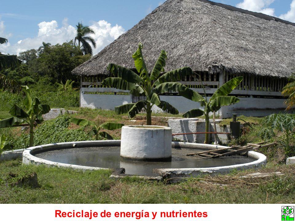 Area (ha) Energía (GJ/ha/año) Proteína (kg/ha)/año Personas que alimenta energía (Pers/ha/año) Personas que alimenta proteína (Pers/ha/año) 10 50.6 867 11 34 Eficiencia Energética Cal producidas/Calorías invertidas 30
