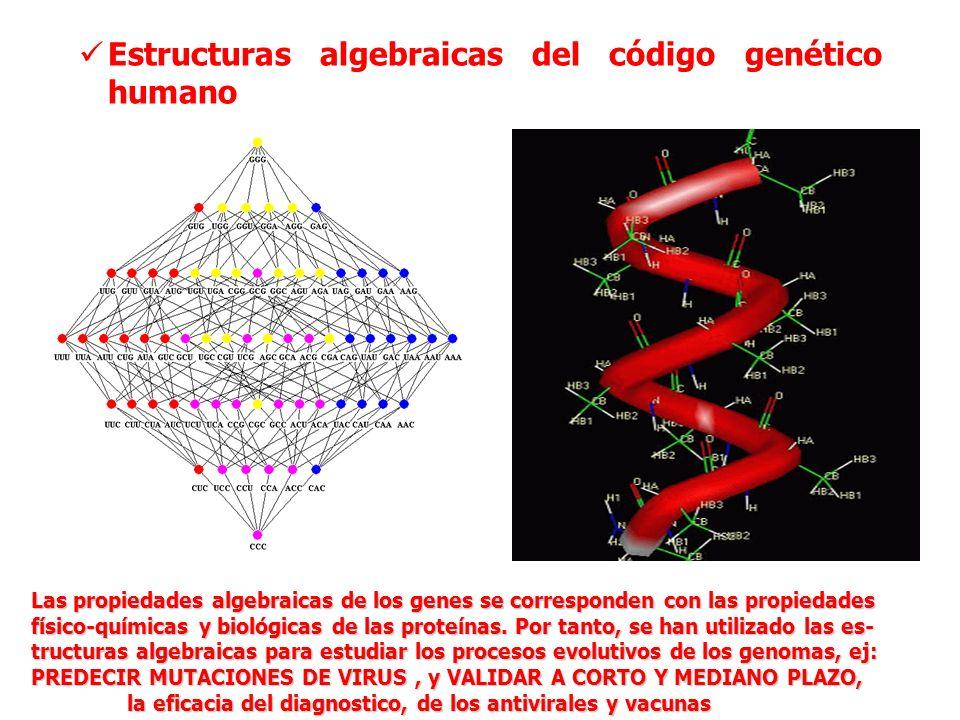 Estructuras algebraicas del código genético humano Las propiedades algebraicas de los genes se corresponden con las propiedades físico-químicas y biol