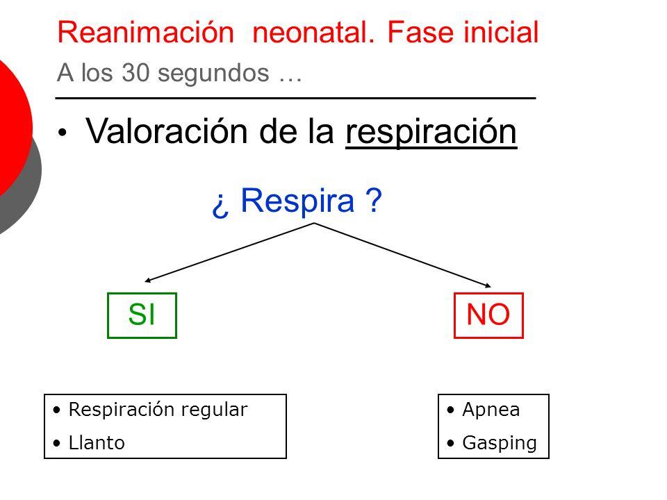 Reanimación neonatal. Fase inicial A los 30 segundos … Valoración de la respiración ¿ Respira ? SINO Respiración regular Llanto Apnea Gasping