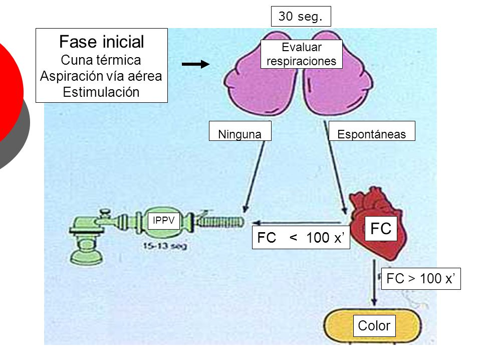 EspontáneasNinguna FC < 100 x FC > 100 x Color Evaluar respiraciones FC IPPV Fase inicial Cuna térmica Aspiración vía aérea Estimulación 30 seg.