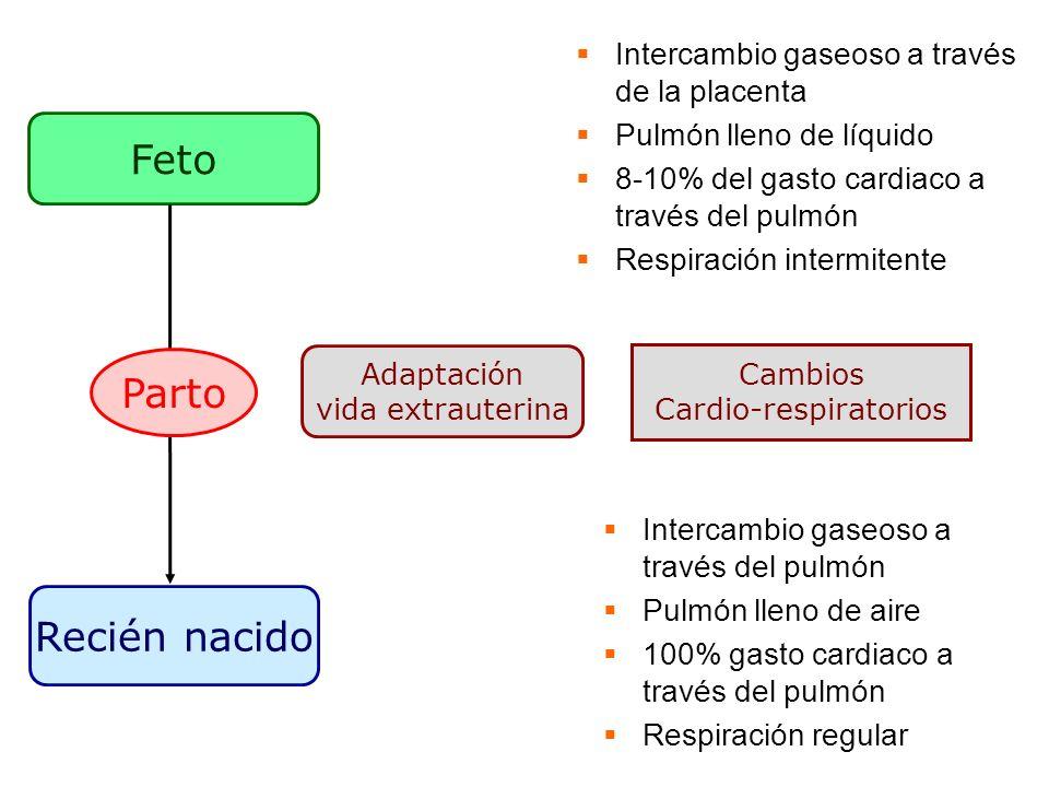 Feto Recién nacido Adaptación vida extrauterina Intercambio gaseoso a través de la placenta Pulmón lleno de líquido 8-10% del gasto cardiaco a través