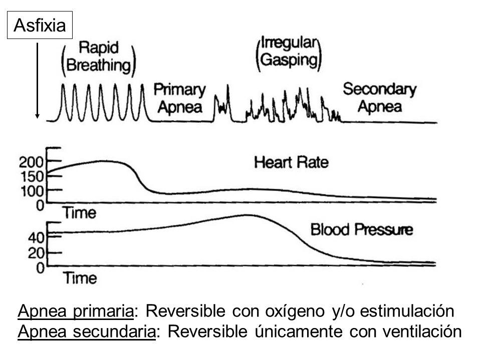 Apnea primaria: Reversible con oxígeno y/o estimulación Apnea secundaria: Reversible únicamente con ventilación Asfixia